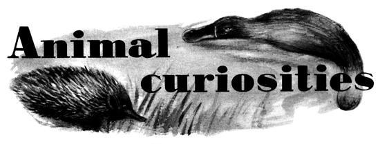 Animalcuriousities